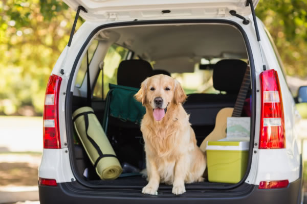Taking your Dog on a Road Trip!