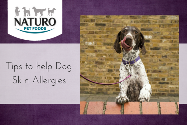 Tips to help Dog Skin Allergies