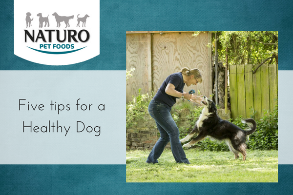 Five Tips for a Healthy Dog