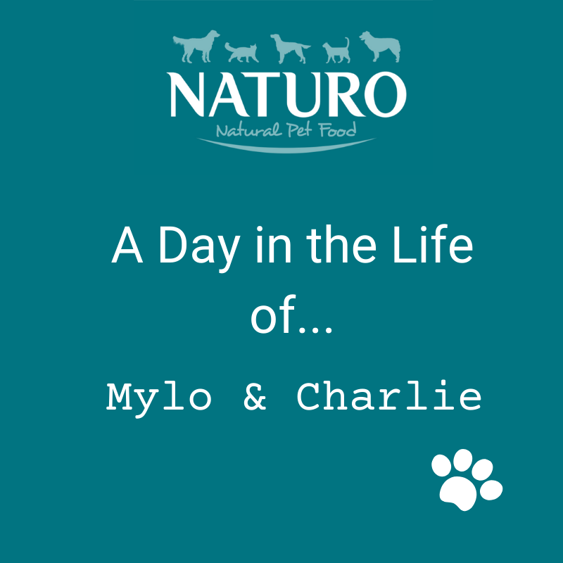 A Day in the Life of... Mylo & Charlie: Part 1