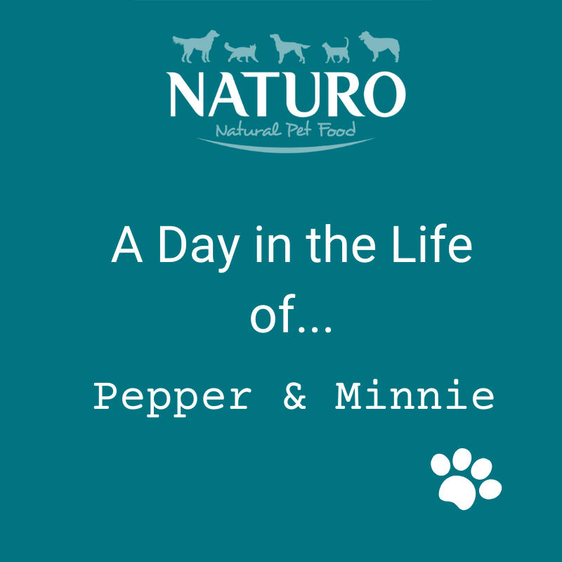 A Day in the Life of... Pepper and Minnie: Part 1