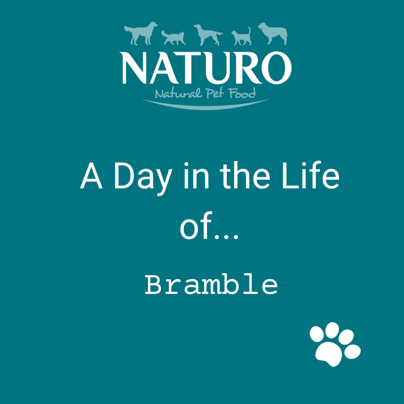 A Day in the Life of... Bramble
