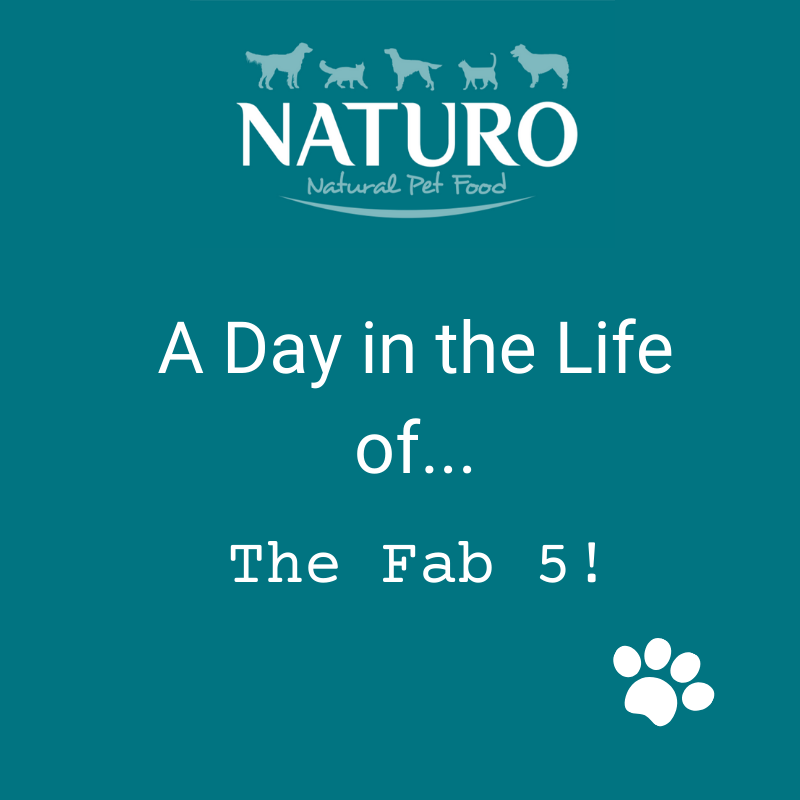 A Day in the Life of... The Fab 5!