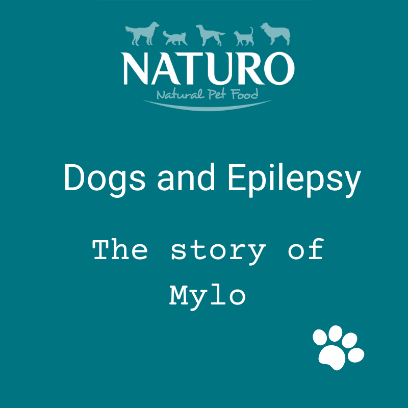 Dogs and Epilepsy