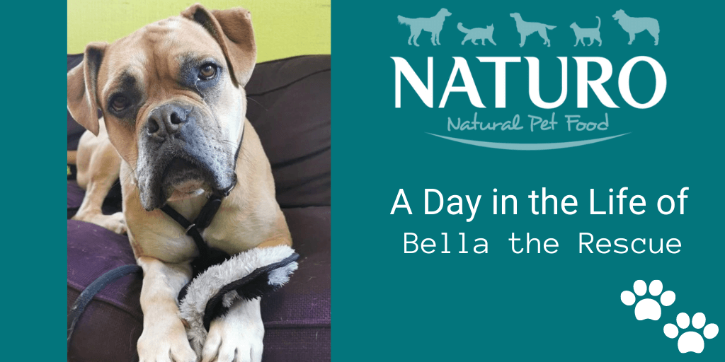A Day in the Life of... A Rescue Dog