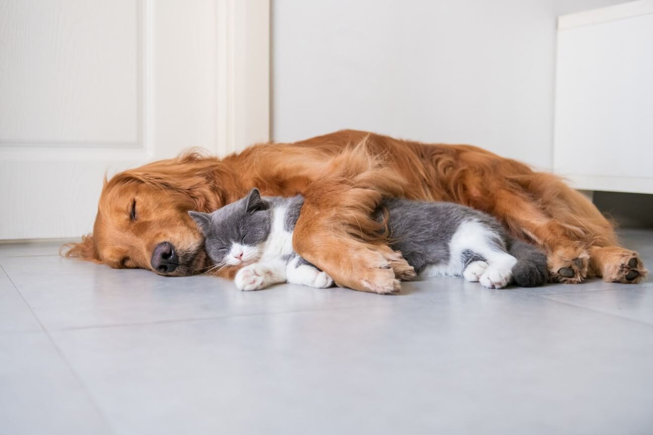 Quirky Pet Habits We Know Too Well