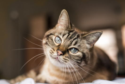 Cat neutering: all you need to know