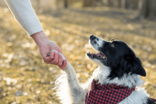 Top five tricks to teach your dog