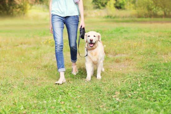 Fleas and ticks: symptoms and treatment