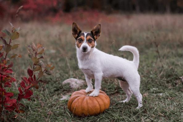 Keeping your pet safe at Halloween