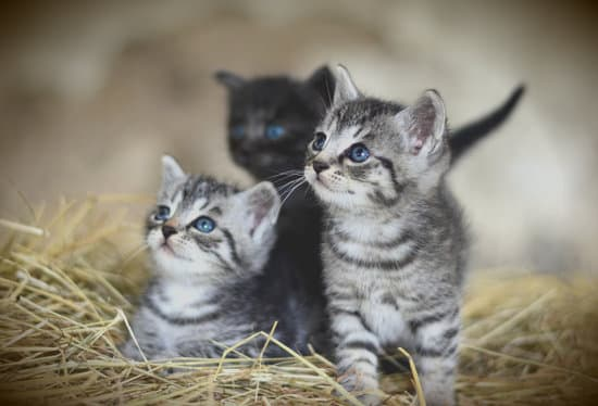 How to prepare your home for a kitten