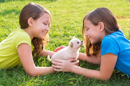 Training your dog to be child friendly