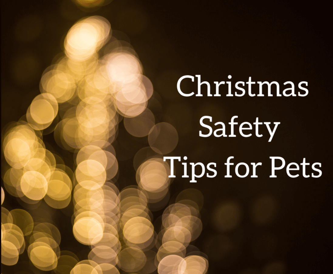 Christmas Safety Tips for Pets