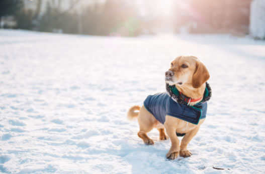Tips for Dog Walking in Winter